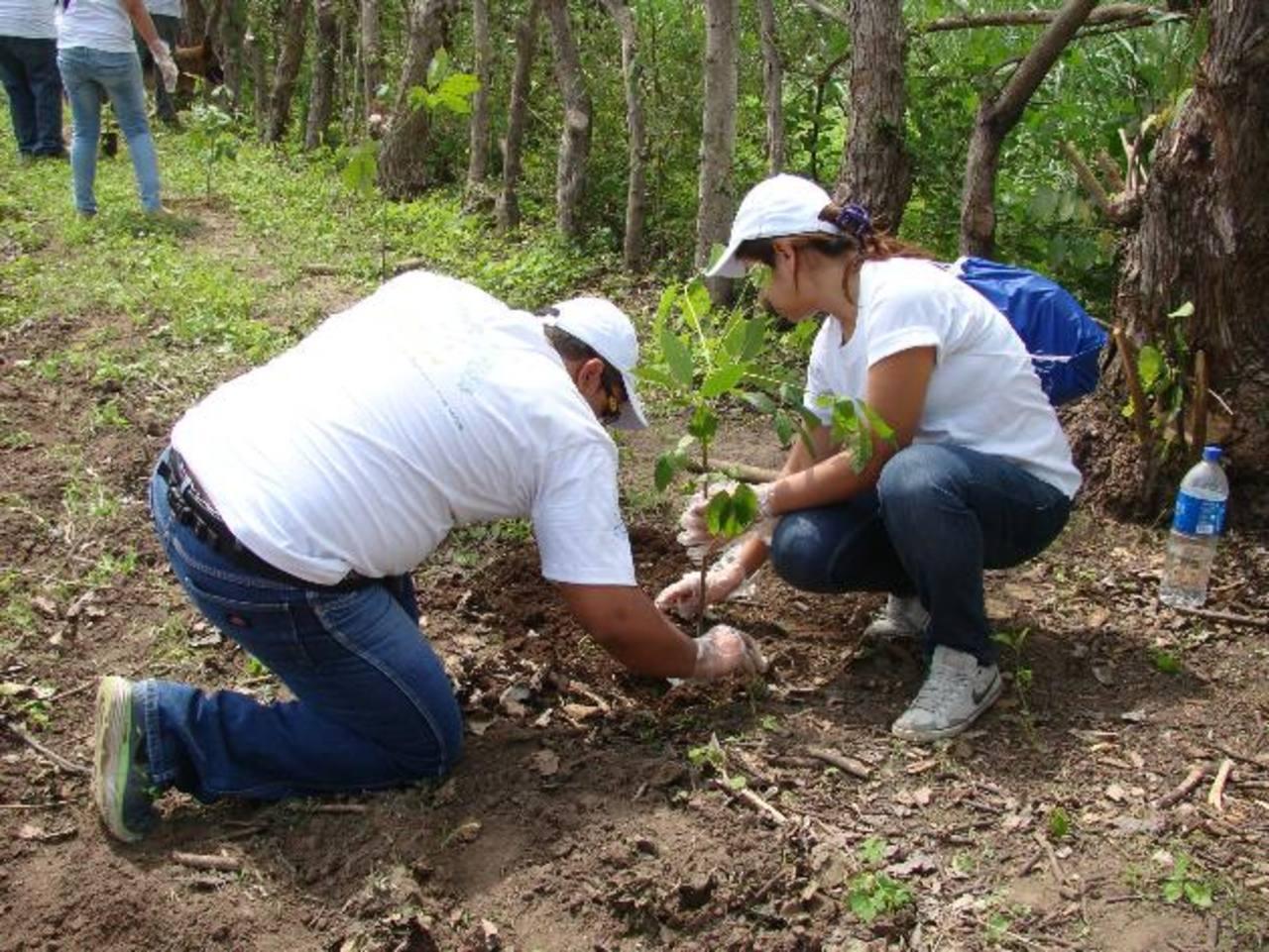 En la jornada de reforestación participaron más de 150 voluntarios. Foto edh / CORTESÍA