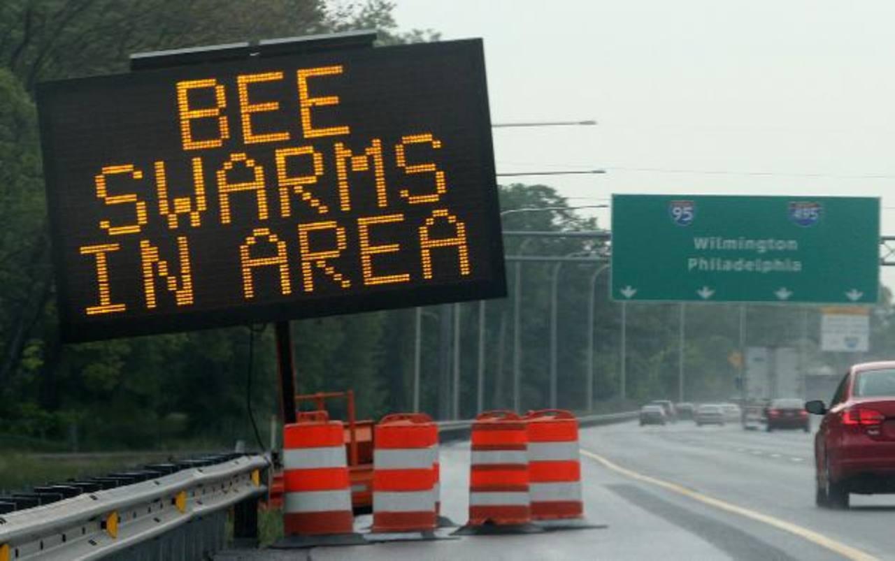 Cerca de 20 millones de abejas amenazan a automovilistas en autopista en EE.UU.