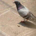 Foto EDH / Marlon HernándezEn la colonia Los Conacastes, en Mejicanos, una persona fue asesinada. Un ave cerca de un casquillo del arma usada.