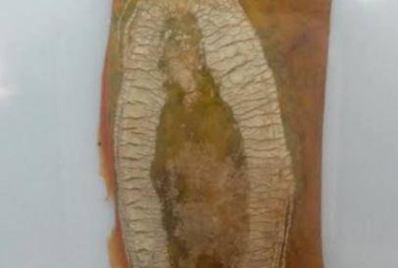 Descubren Virgen de Guadalupe en una papaya