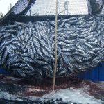 """La soliciantenimiento$25 mil anuales por 10 años. Una """".com"""" cuesta menos foto Según datos de la FAO correspondientes a este año, alrededor de un 29 % de las poblaciones de peces sobre las que existe información fiable está sobrexplotado. foto edh"""