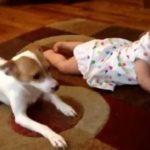 Video: Perro enseña a bebé de 7 meses cómo gatear