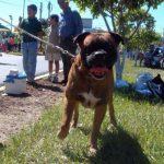 Fiscalía investiga ataque de perros que dejó grave a una mujer en Chalchuapa