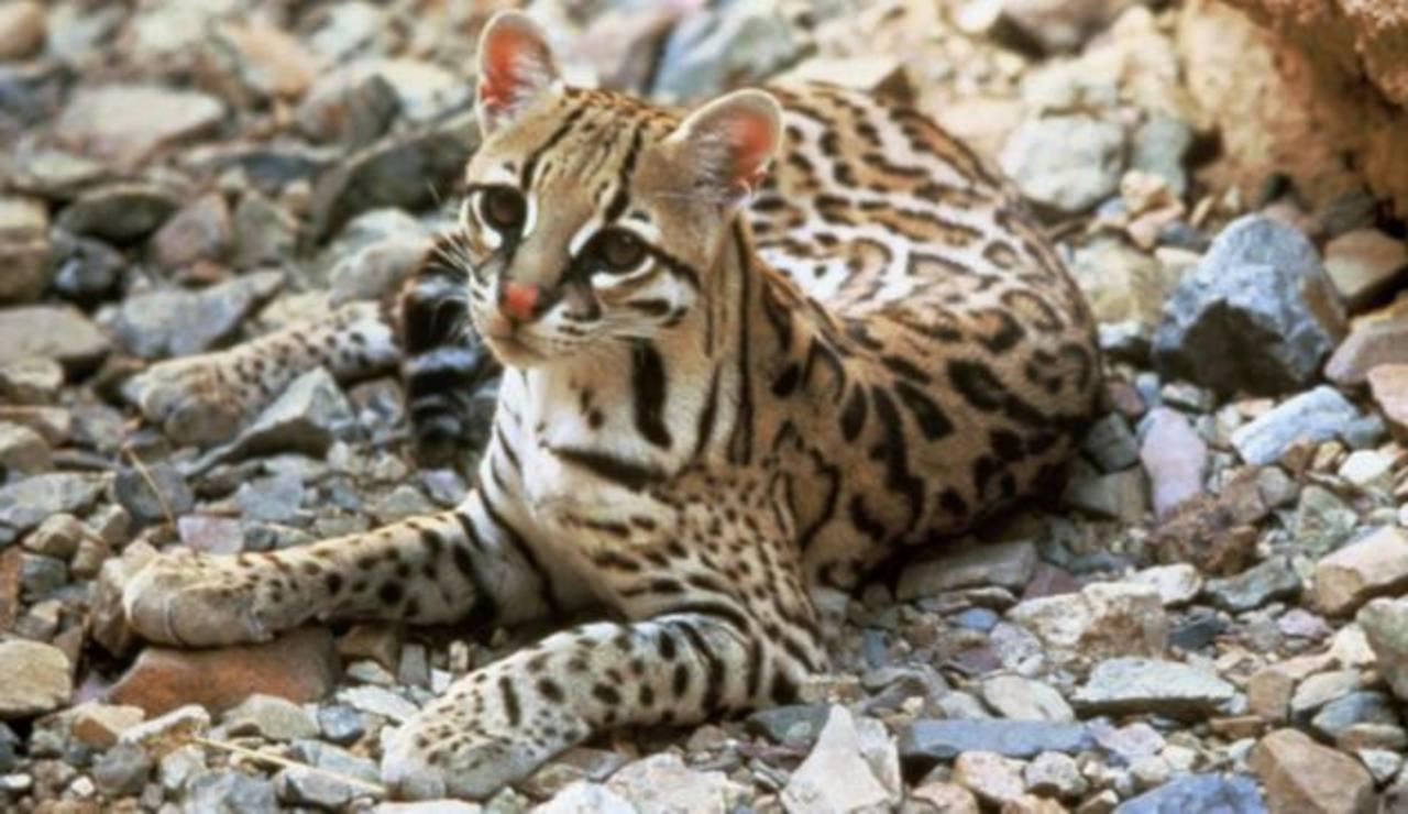 Los 10 animales en peligro de extinción en El Salvador | elsalvador.com