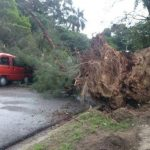 Mujer muere tras caerle un árbol en La Libertad