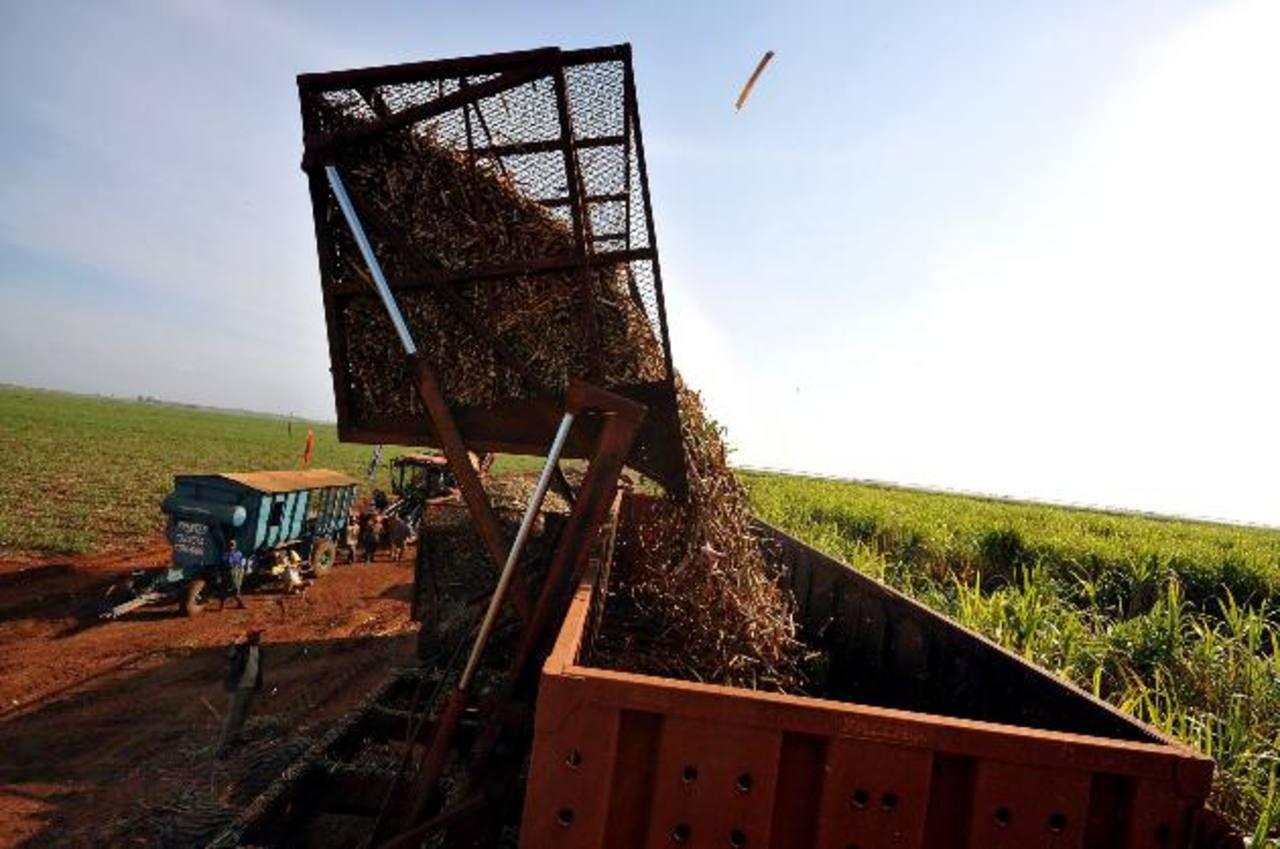 Las naciones centroamericanas podrán beneficiarse de la nueva cuota azucarera estadounidense. Foto edh