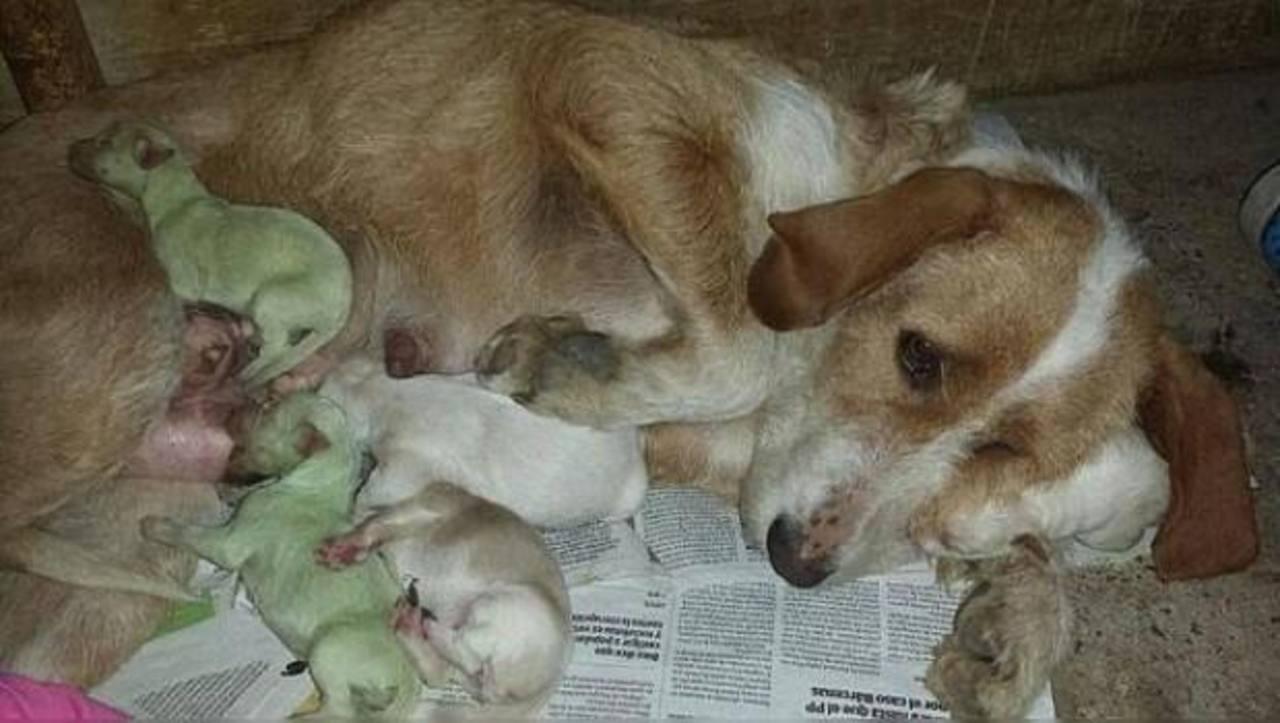 Fotos: Dos perros verdes nacen en España