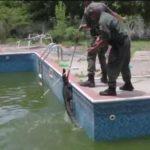 Hallan un cocodrilo en la piscina de una casa en EE.UU.