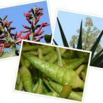 6 flores que forman parte del menú salvadoreño