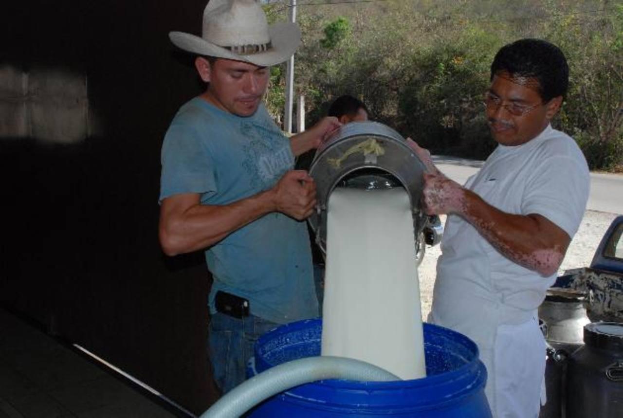 La producción de leche está mermando, debido a que no hay pasto para alimentar a las vacas. Foto EDH / Archivo