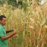 El fenómeno natural afecta entre el 5 % y 10 % de las cosechas del país. Estas pueden variar dependiendo del impacto del cambio climático y las zonas que afecta.