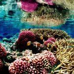La recuperación es aún posible, si se restringe la pesca y se reduce la contaminación. foto edh