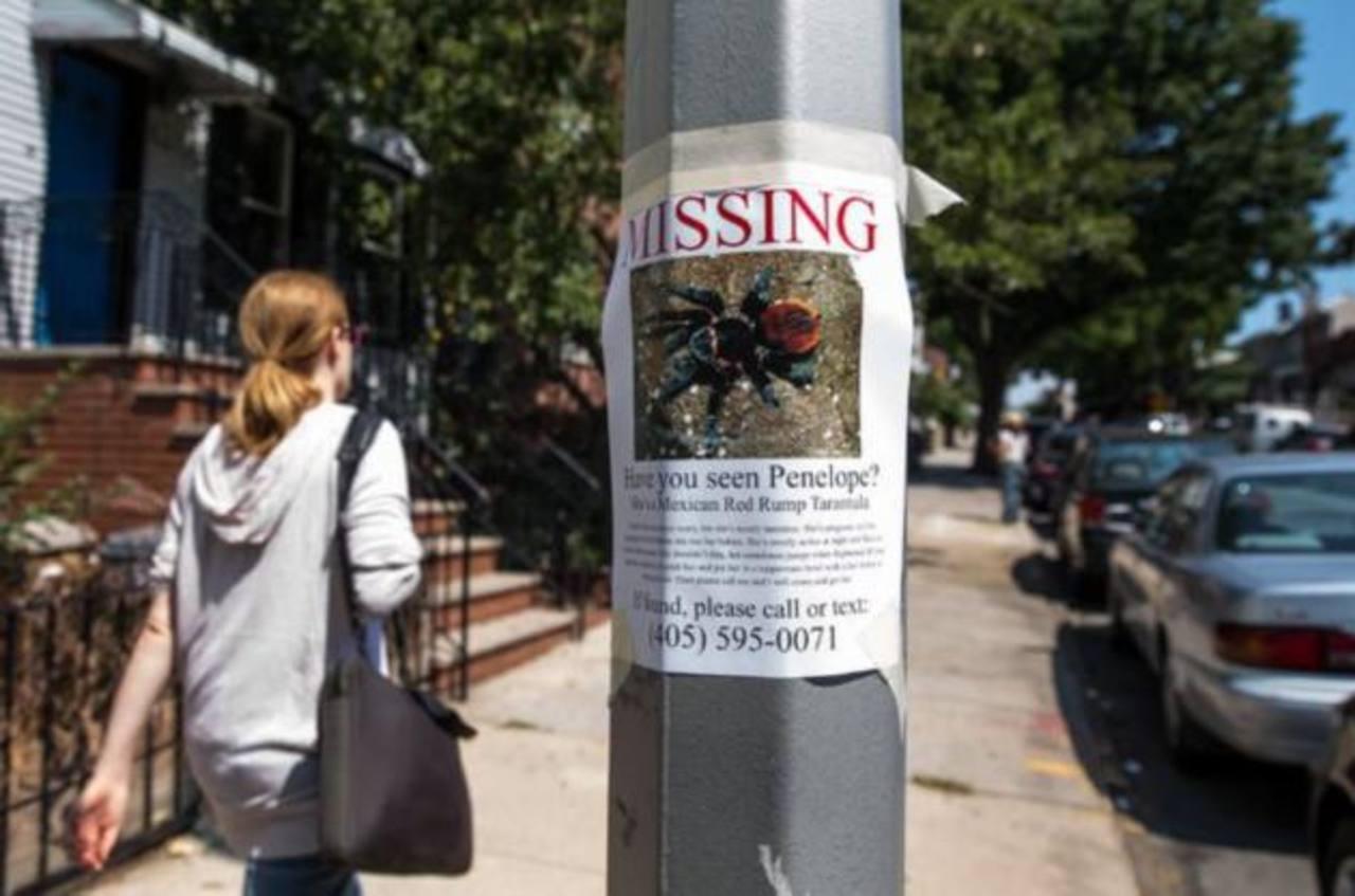 La tarántula perdida en Nueva York, una broma que se fue de las manos