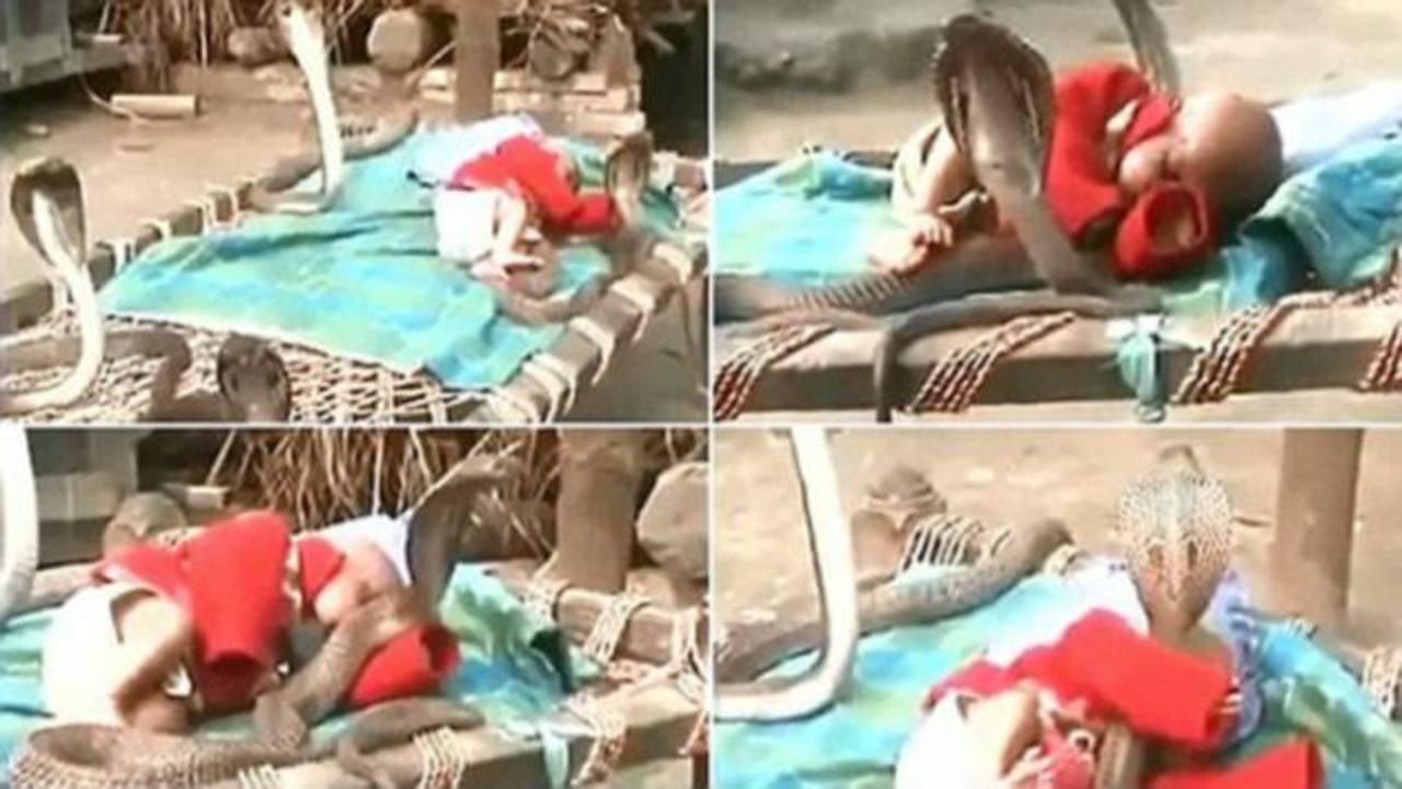 Video: Cobras protegen a bebé mientras duerme