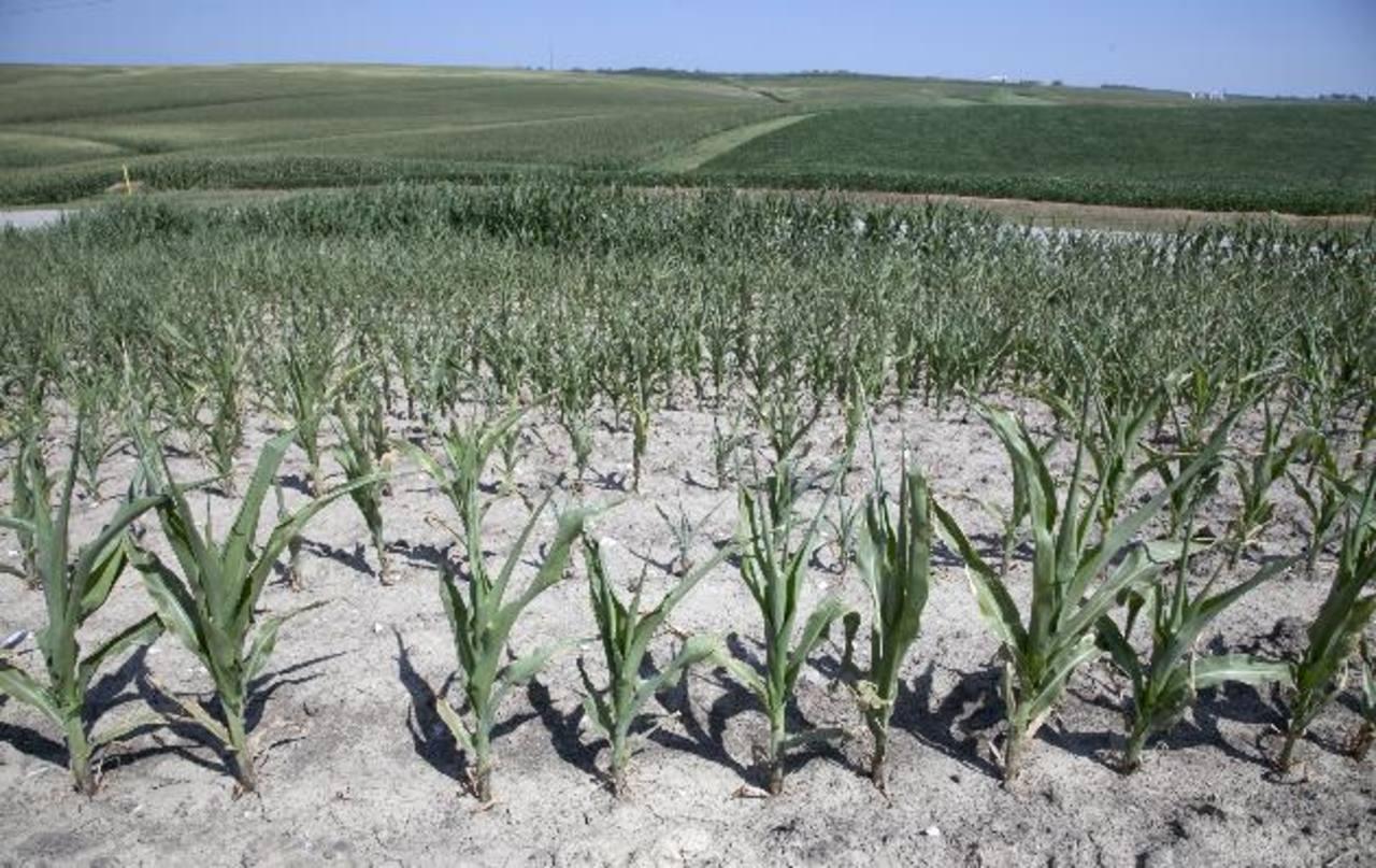 El fenómeno El Niño genera sequías en algunas zonas de Centroamérica. Fotos edh/Archivo