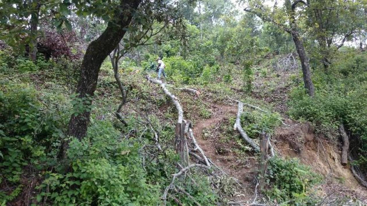 El bosque entre Citalá y Metapán es descuajado por dueños de los terrenos para sembrar milpa, frijol, o para ganadería.