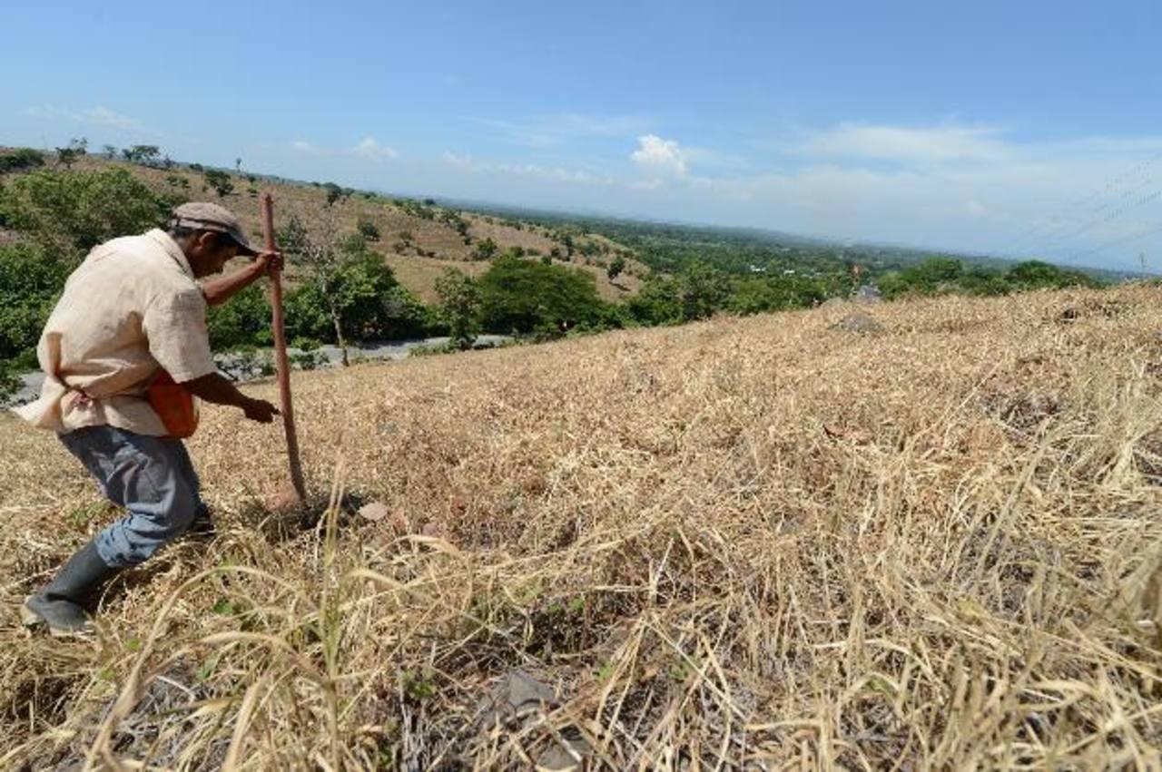 MARN: Severa sequía afecta zona oriental del país