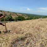 Centroamérica debe prepararse ante la sequía