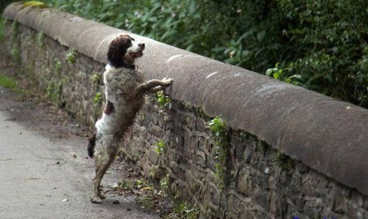 ¿Conoces sobre el Puente Overtoun, el sitio donde los perros se suicidan?