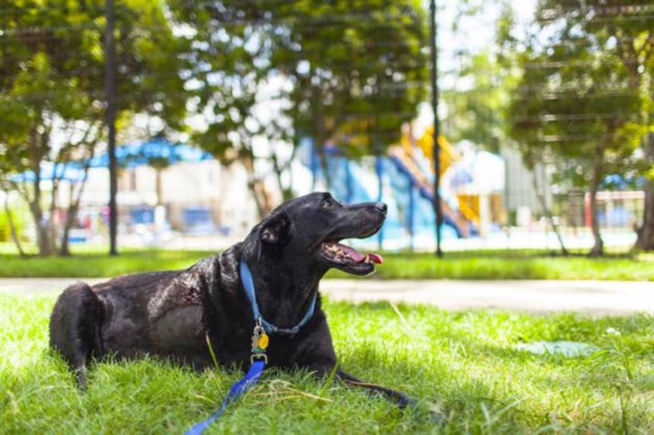 Duke en el parque