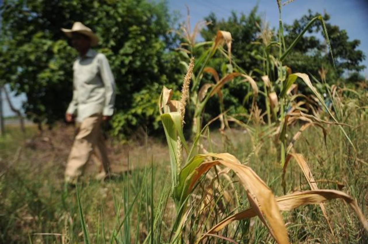 Meteorólogos señalan que la falta de lluvia seguirá afectando la región centroamericana y Belice. La situación complicará la producción de granos, pero también la generación energética por el descenso en los niveles de los ríos. Foto EDH / ARCHIVO