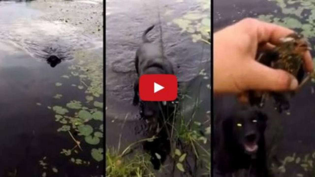 Perro salva a pajarito de morir ahogado