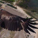 Las 6 mejores fotos tomadas con un drone