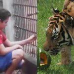 Video: Tigre le arranca la mano a niño en un zoológico en Brasil