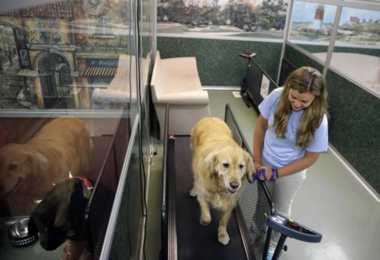 Fotos: Hotel ofrece programa de reducción de peso para perros y gatos