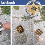 Viral: Niñas queman tortuga y suben el video a Facebook