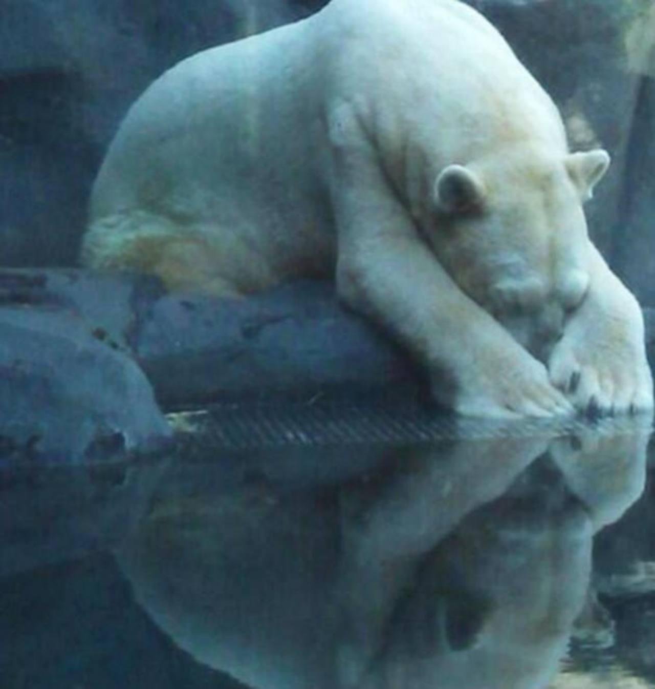 """Con 300 mil firmas piden trasladar de Zoo al """"animal más triste del mundo"""""""