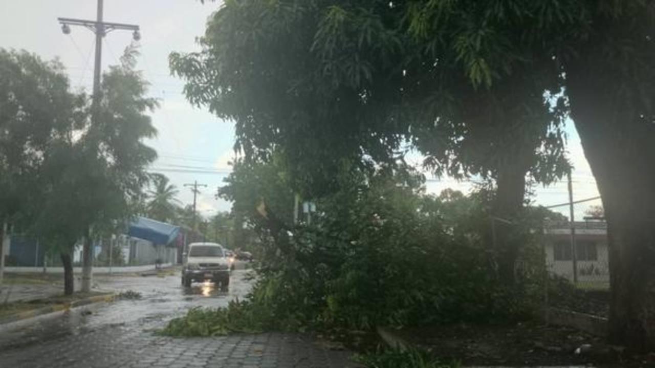 Fuertes vientos derriban árboles, postes y rótulos en San Miguel