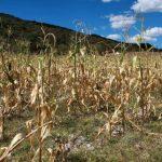 Altos precios en granos básicos es por sequía que azota la región, según Fecagro