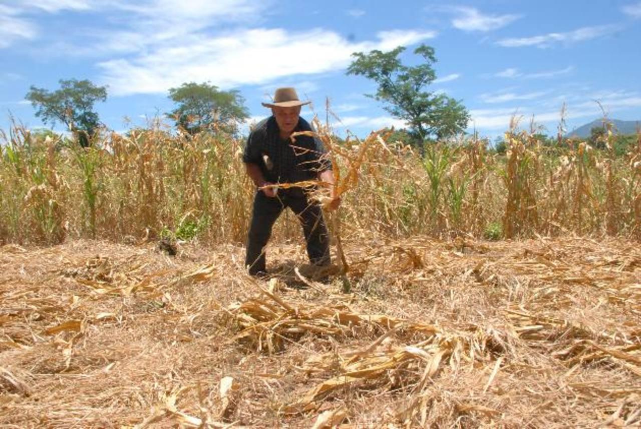 Sector agrícola reporta pérdidas de $312.5 millones por sequía