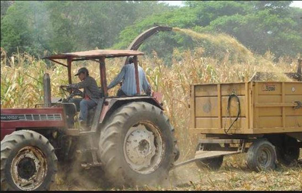 Nueva cosecha será en 120 días y miles no tienen para alimentarse