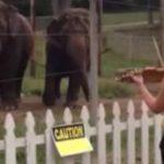 Video: Dos elefantes bailan al son del violín