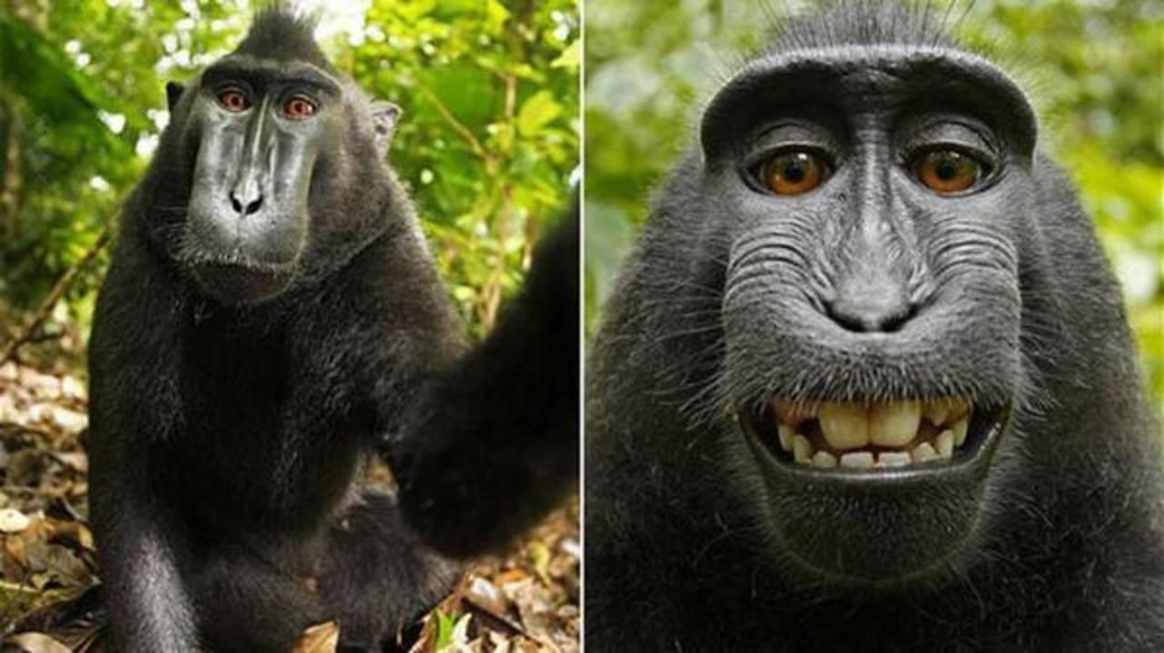 Selfie de un macaco.