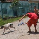 Murió Dólar, perro callejero que dio vida a asociación de rescate de animales