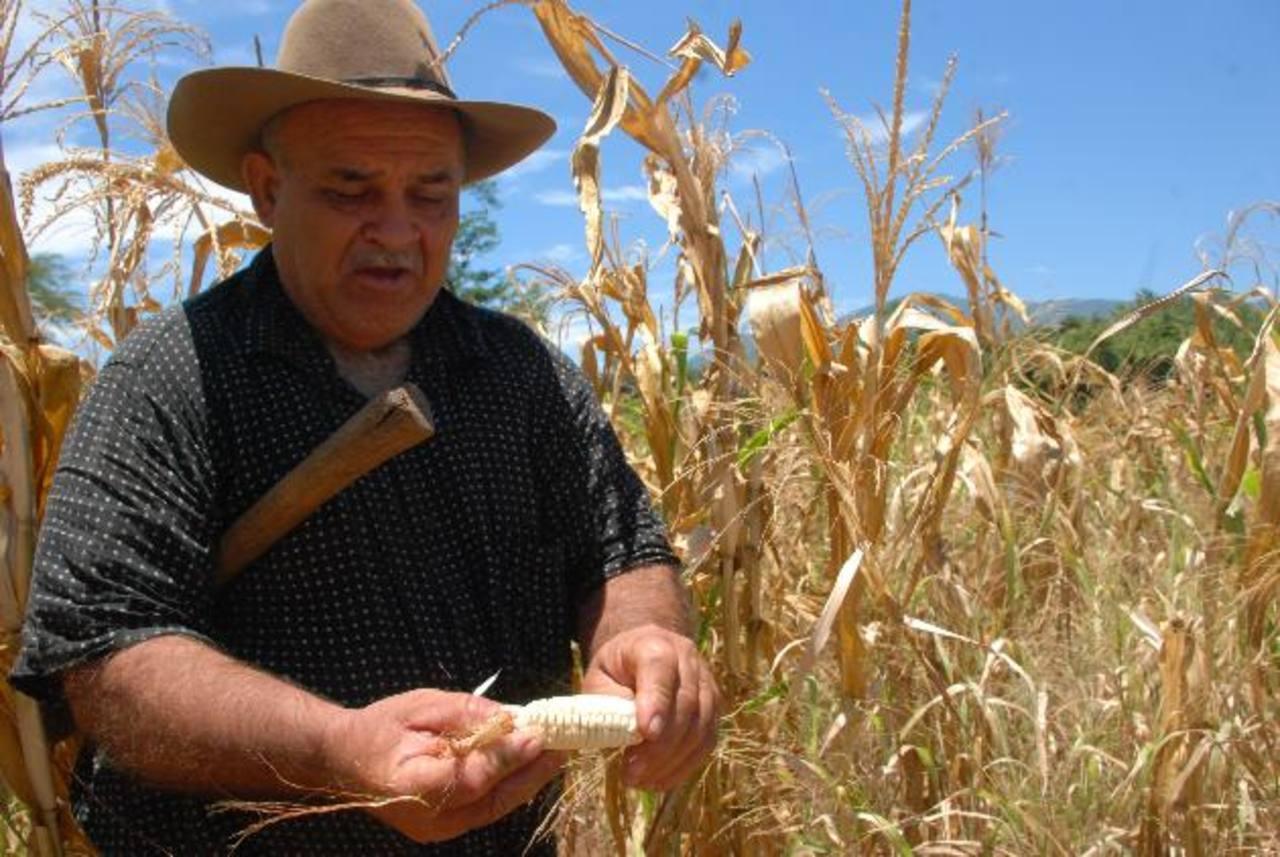 Los agricultores de La Unión, en general, resultaron afectados con la sequía y hay quienes perdieron toda la inversión hecha en la siembra. foto edh / archivo