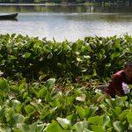 Agonizan peces en laguna de Metapán