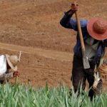 MAG: 96 mil productores agrícolas afectados por la sequía en El Salvador