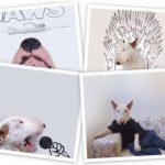 FOTOS: Perro bull terrier conquista Instagram