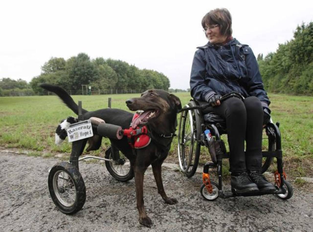 Gracias a la silla de ruedas, Hope puede relacionarse y jugar con otros perros.
