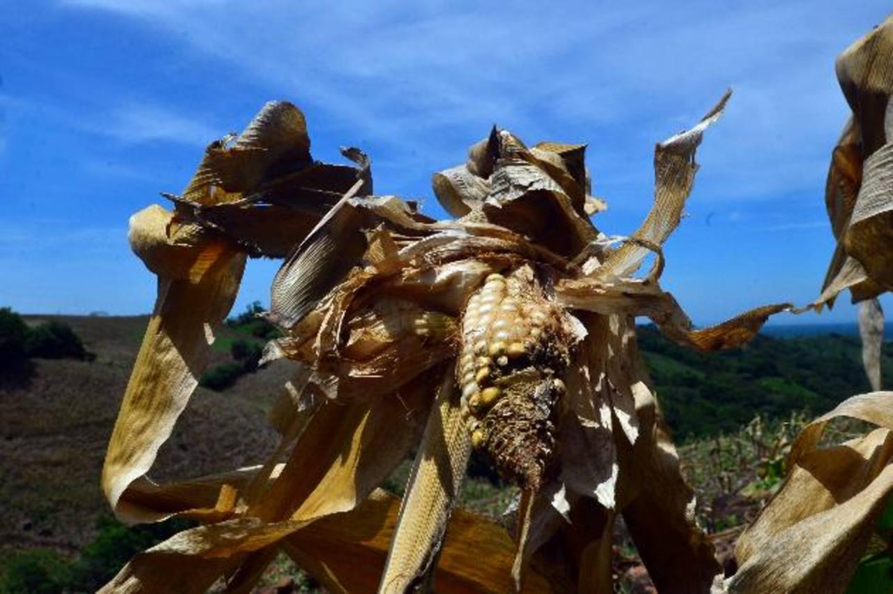 Frijoles, arroz y maíz siguen siendo los productos básicos de rigor para millones de salvadoreños.