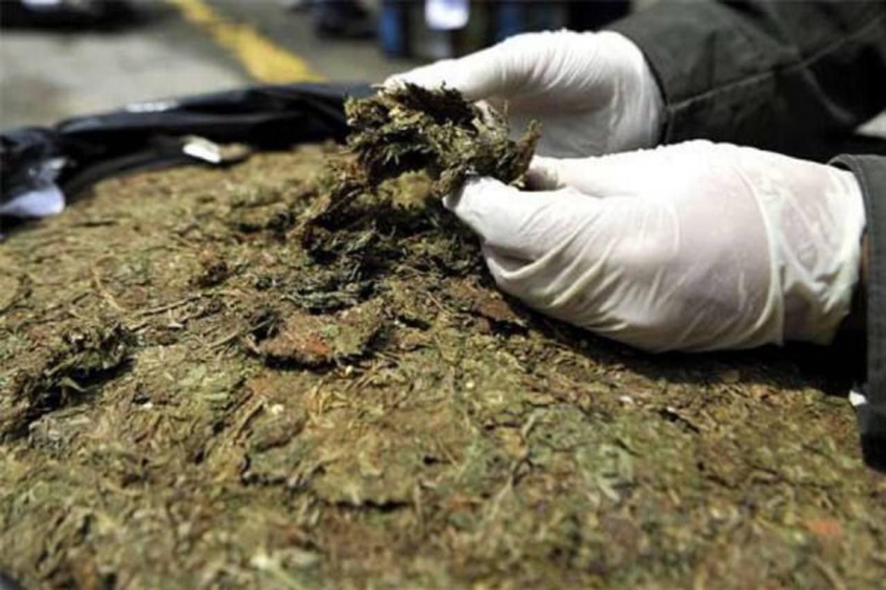 Decomisan 1,4 toneladas de marihuana en Costa Rica