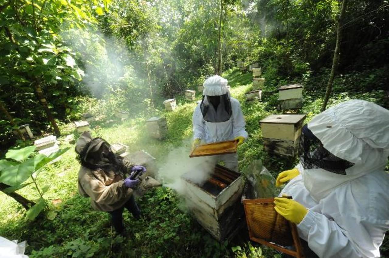 Daniel (al centro) junto a otros jóvenes, se encarga de revisar las colmenas para extraer la miel, un trabajo arriesgado que requiere estar completamente equipado para realizar todo el proceso y evitar espantar a las abejas. foto EDH / Lissette Monte