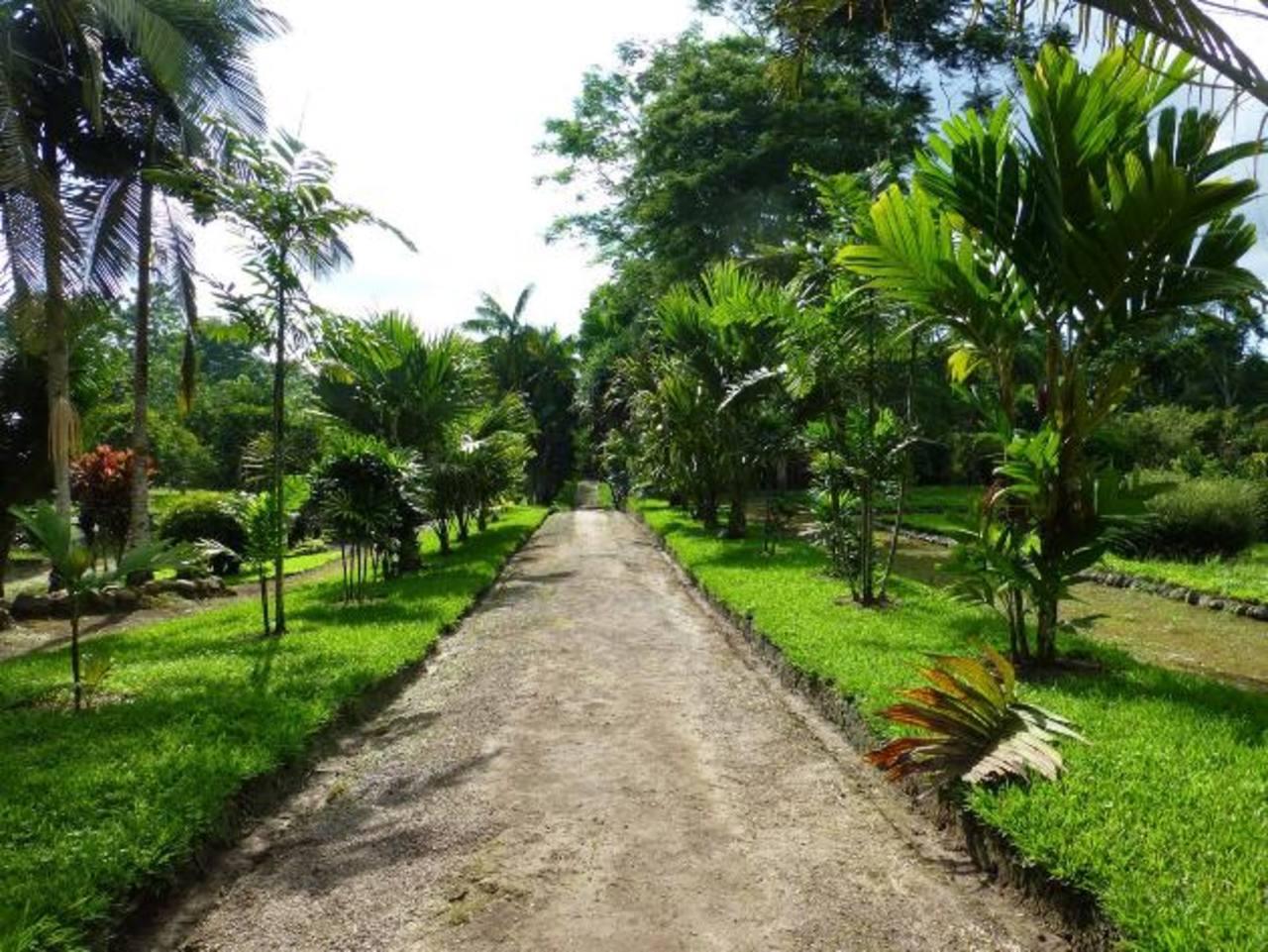 Aproveche las ventajas de cultivar palmeras