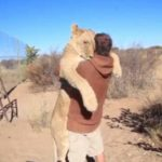 VIDEO: Leona demuestra el cariño que tiene a su cuidador