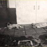 Oso no se separó de su amo tras ser asesinado hoy en San Jacinto, San Salvador.