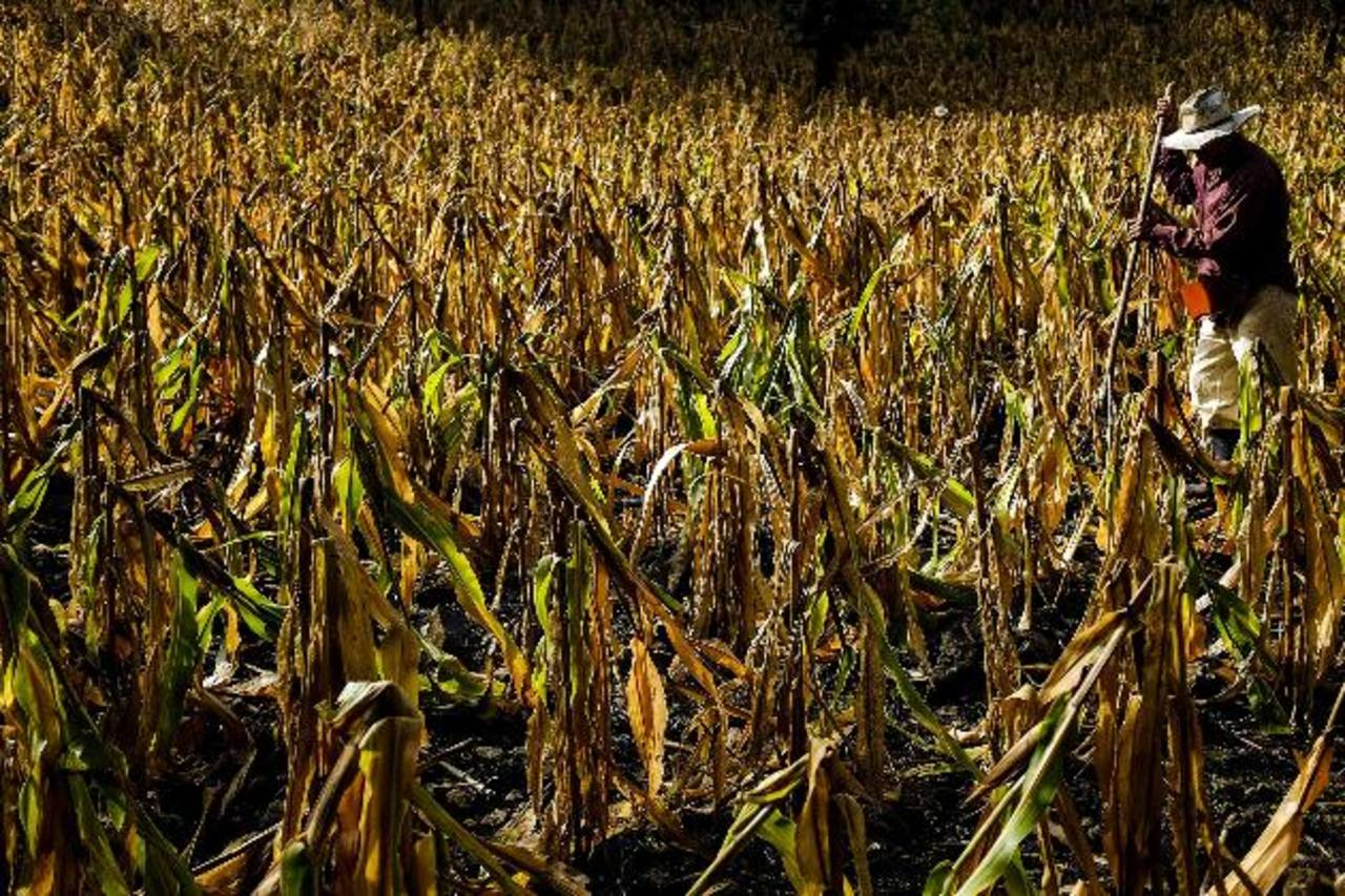 La sequía en Guatemala ha afectado la seguridad alimenticia de miles de personas . foto edh / Archivo